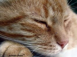 Bronchitis in Cats