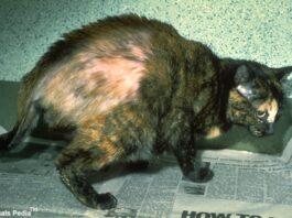 Cushing in cats
